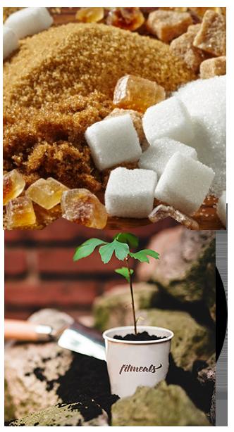 05_Sugar