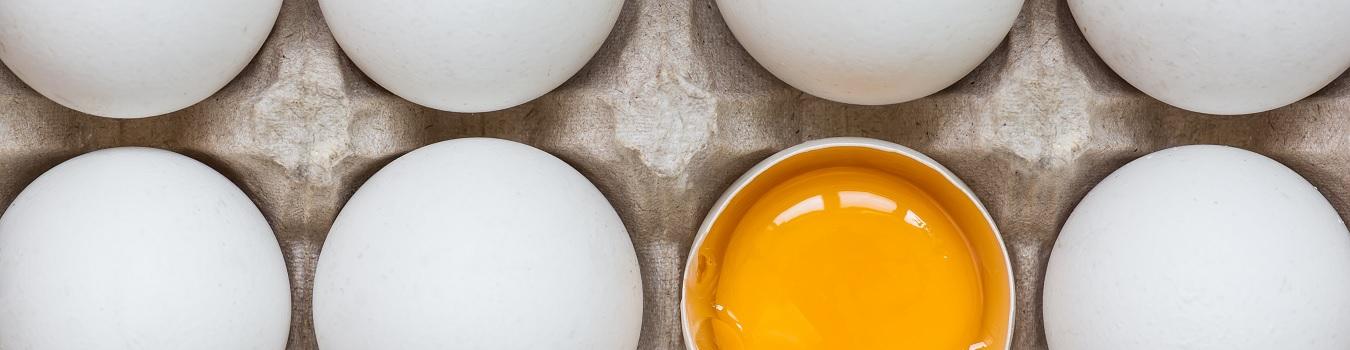 Fakten-ber-Eier