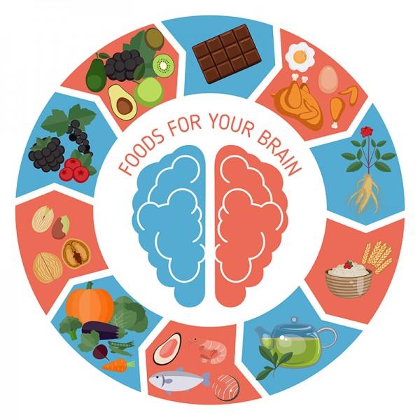 Lebensmittel-f-r-das-Gehirn